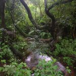 stream flowing through greystone park nature reserve. Copyright Flora of Zimbabwe