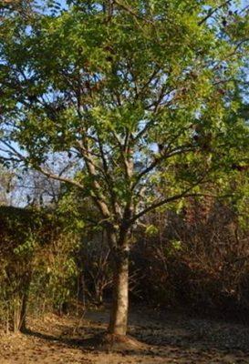 The Tree in our garden – Photo Ryan Truscott