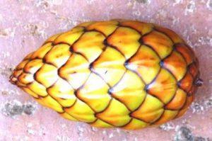 Raphia farinifera. Photo: Rhett Butler. Source: Flora of Zimbabwe