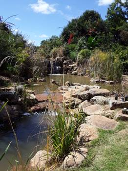 Backyard water feature Photo by Tony Alegria