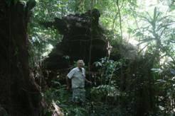 Chirinda forest
