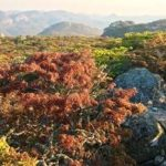 Hidden Rocks, Nyanga Photo by Lucina Faccio