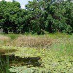 National Botanic Garden Lake