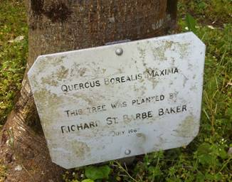 Tree planted by St Barbe Baker (Image WikiCommons)
