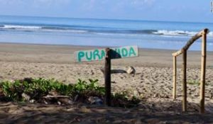 "Tourists flock to Costa Rica for its pristine beaches, wildlife and to experience ""pura vida."""