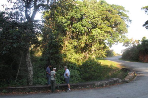 On the Vumba Rd Photo Ann Sinclair
