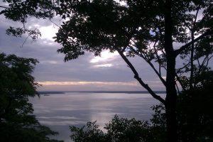 Msasa overlooking Lake Chivero