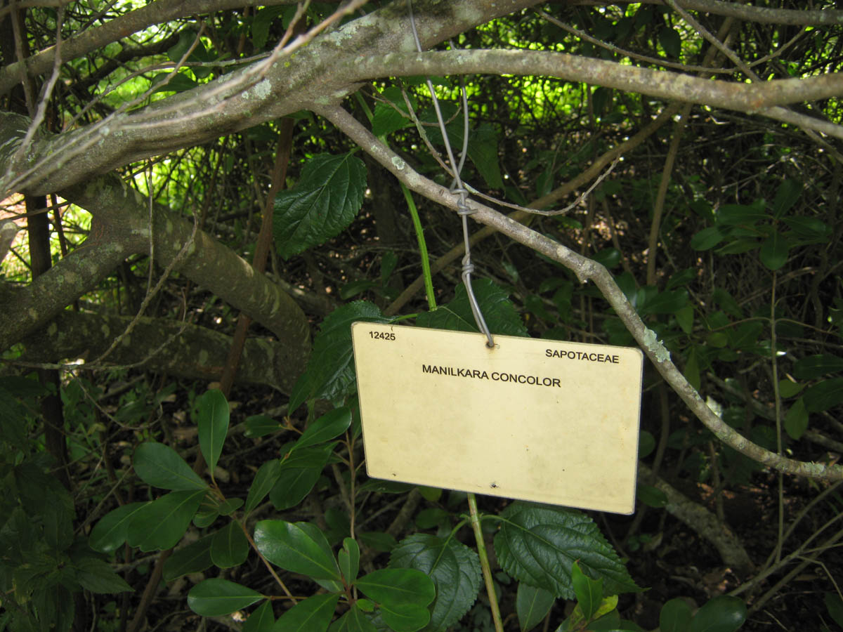Tree labeling example
