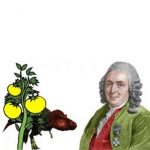 Prof. Carl Linnaeus. Photo: Wikipedia